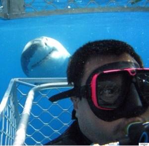 Shark spotting gozo tour