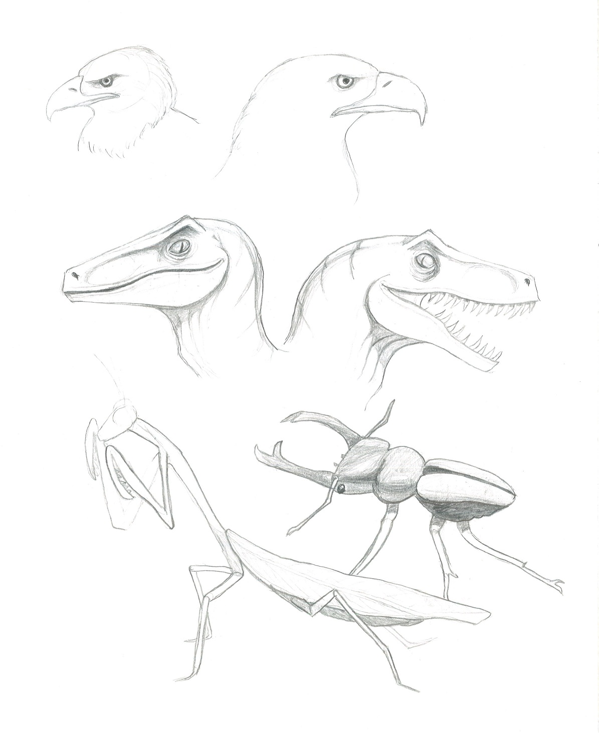 Animal Stu S For Monster Gotta Keep Drawing