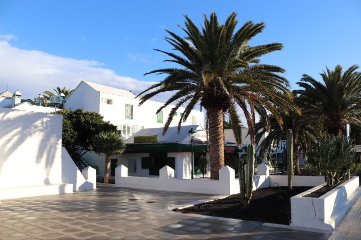 A view of palm trees in the Costa Teguise, Lanzarote