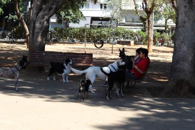 Dogs in Gan Meir Park