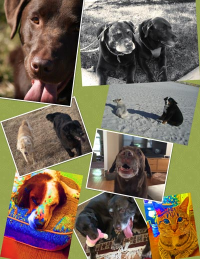 Remembering Our Animals