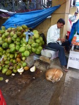 Coconut man and his dog