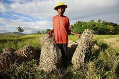 farmer in Timor Leste