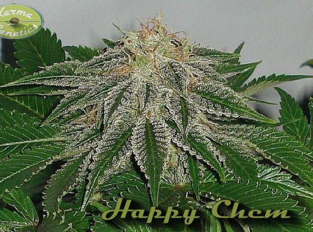 Happy Chem LTD