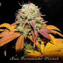 San Fernando Diesel LTD