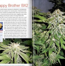 Happy Bro BX2 Cannabis Indica Article