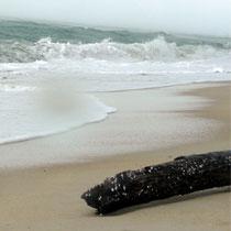 Welle und Flut