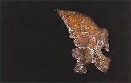 Partial skull from Zuttiyeh