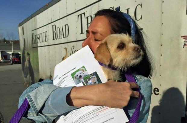 Road Trip for Rescued Dogs