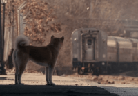 Hachiko movie review