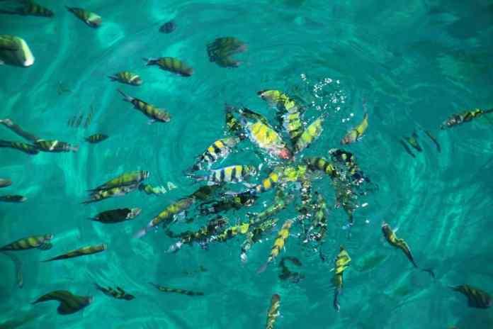 Sea life of Andaman Sea