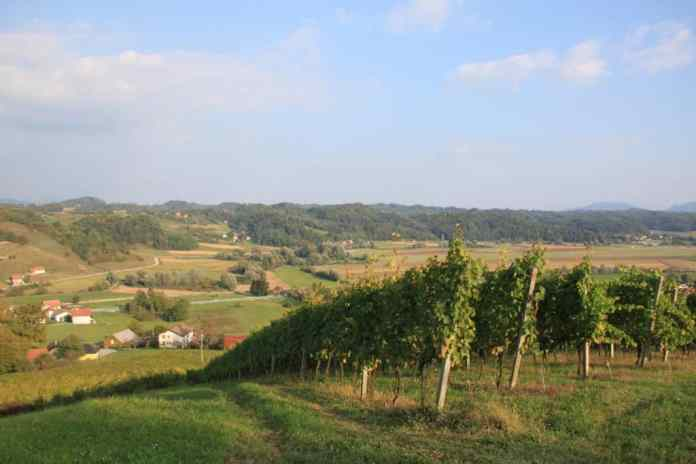 wine - Slovenia facts