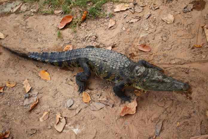 Reptiles in Florida