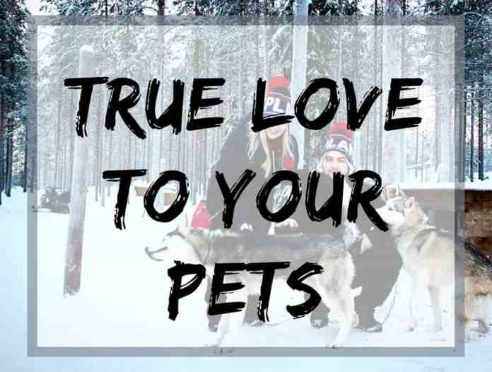 True love to your pets