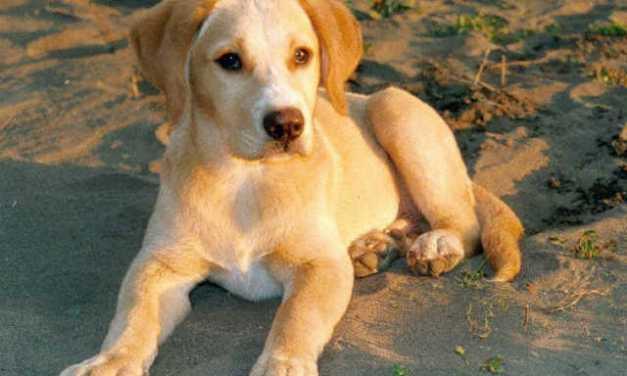 A fél világot bejárták a háziasított kutyák