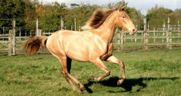 Ritka, aranyfakó ló maradványaira leltek a Góbi sivatagban
