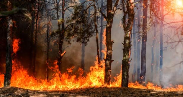 Súlyos erdőtűz pusztít Gran Canaria hegyeiben