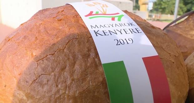 Idén több mint 600 tonna búzaadományra számítanak a Magyarok Kenyere programban