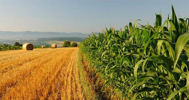 Mezőgazdasági együttműködés jött létre Ukrajna és Spanyolország között