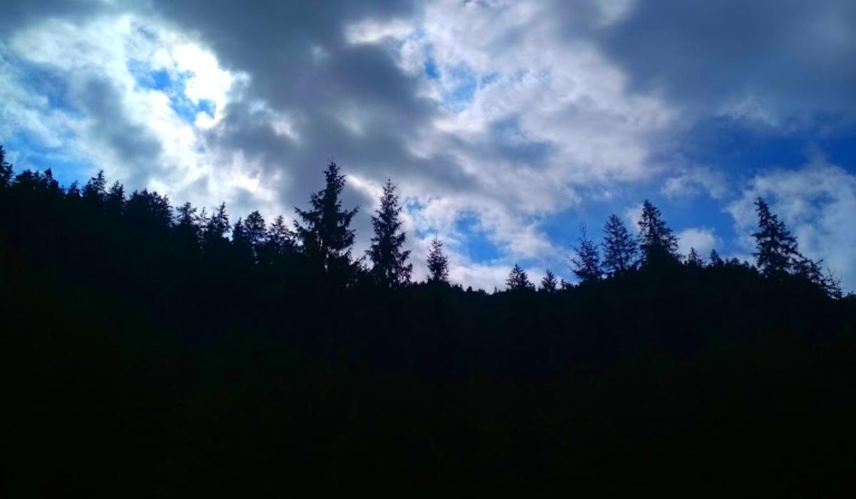 erdő Kárpátalja