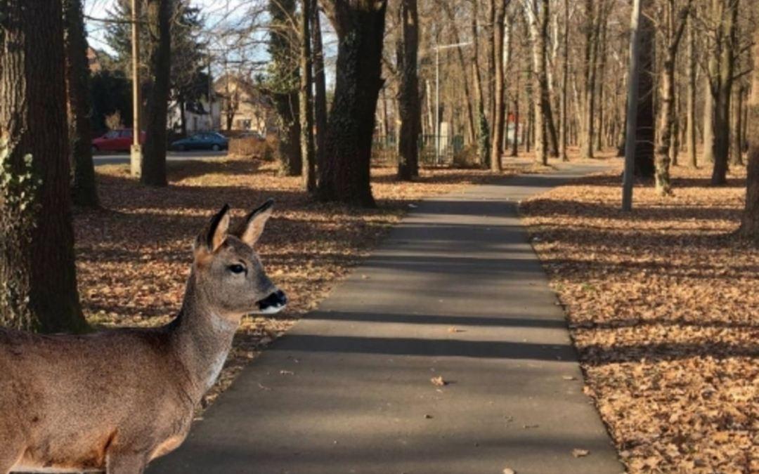 A városi vadvilág alkalmazkodott az ember életmódjához