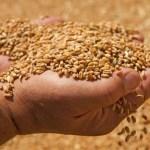 Ukrajna közel 30 millió tonna gabonát exportált