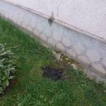 Molotov-koktélt dobtak egy képviselő udvarára a Munkácsi járásban