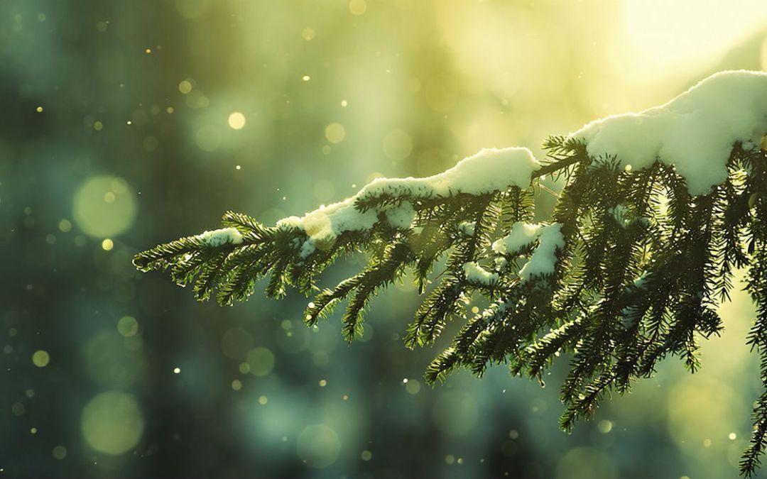 Zelk Zoltán: December