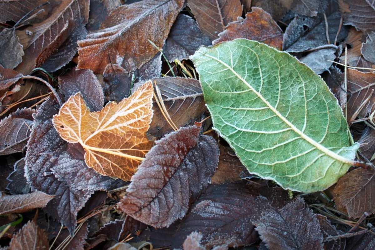 fagy levelek ősz