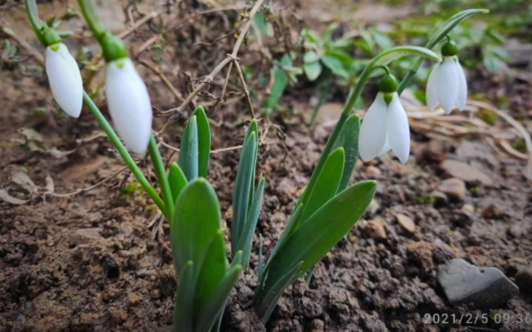 Kárpátalja ma: a tavasz hírnöke