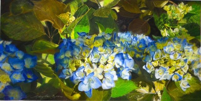 Hydrangea in pastel by Sydney Zylstra