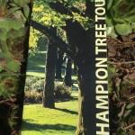 The unhelpful tree map