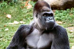 Ivan look alike