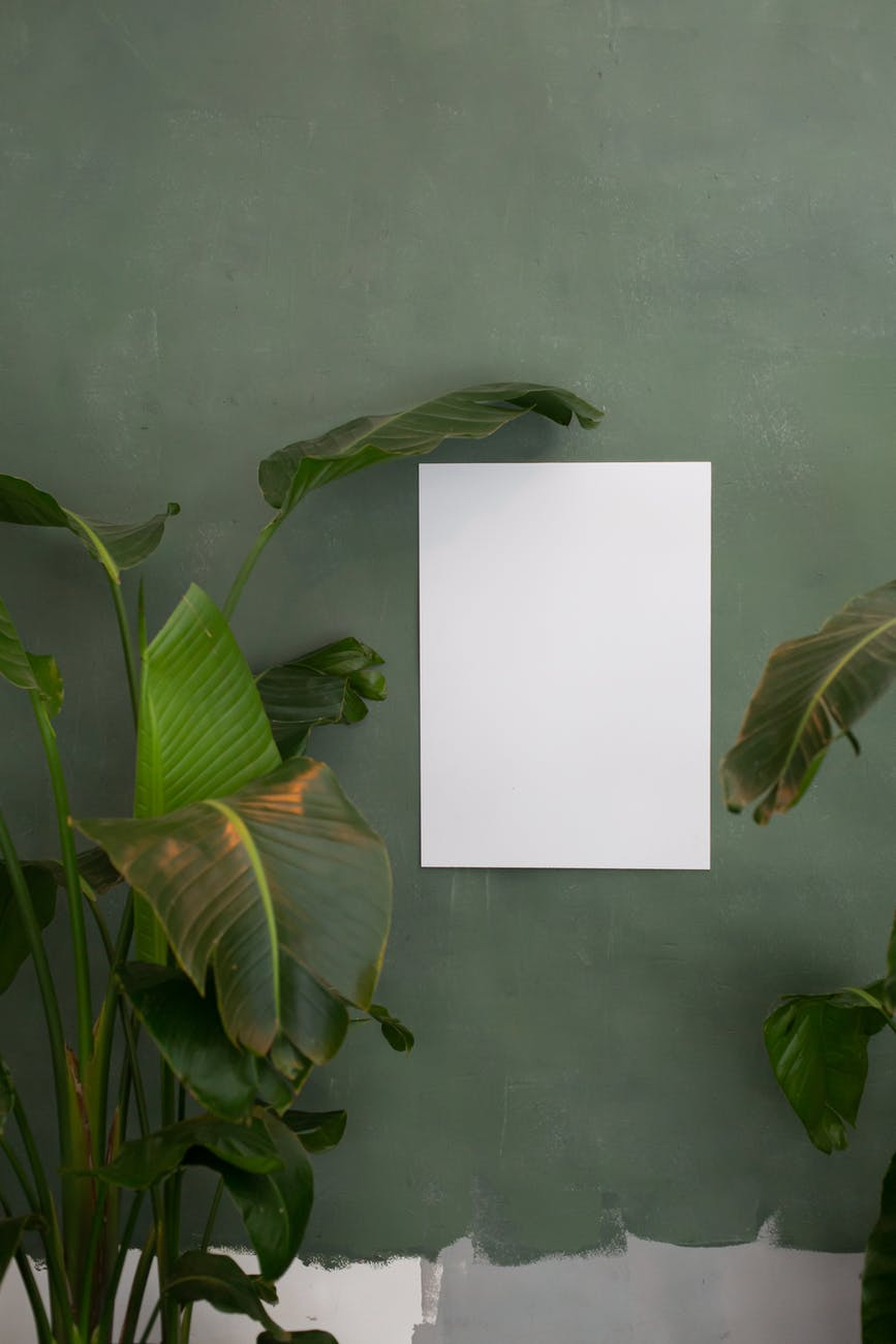 empty paper on green wall