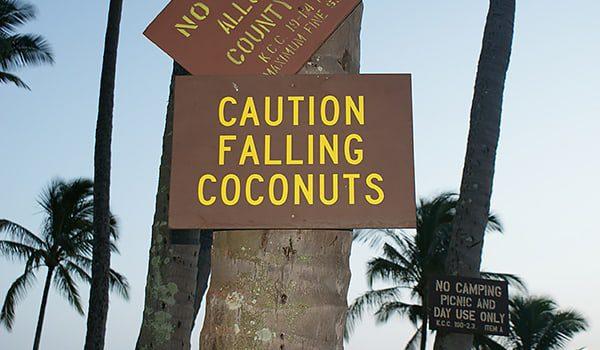 coconuts-karryon