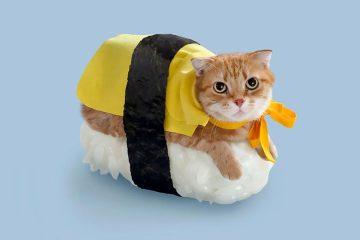 cat-sushi-japan