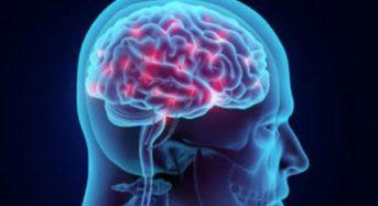 Για πρώτη φορά επιστημονικά πειράματα με μίνι-εγκεφάλους που θα περιέχουν DNA Νεάντερταλ!