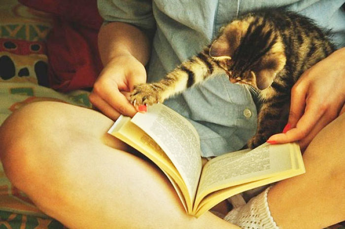 Book, Cats, Life is Good..