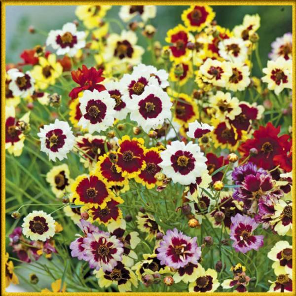 Двухцветные цветы с названиями