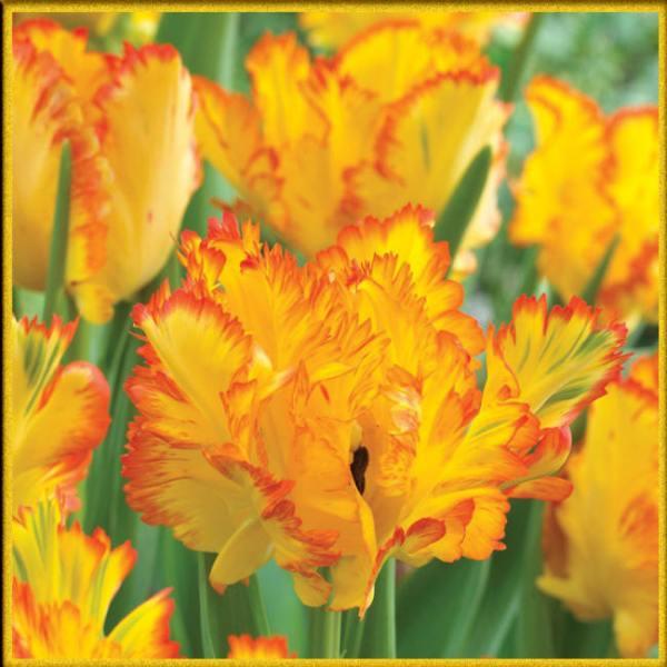 Большая коллекция фото и картинок оранжевых цветов с ...