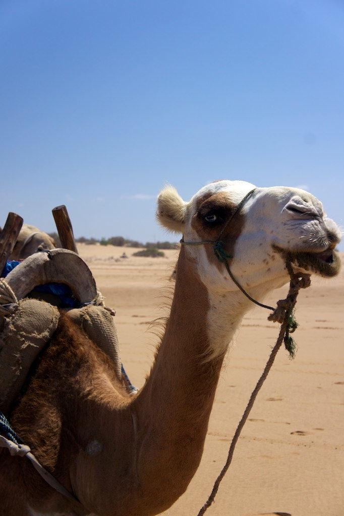 Essaouira, plaża