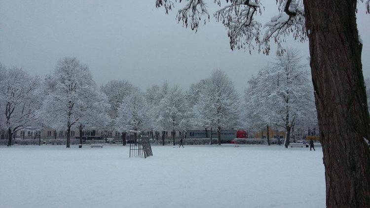 nevada en colonia