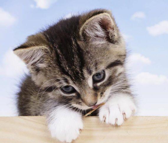 Красиві картинки і фото кішок, кошенят і котів. | Фото та ...