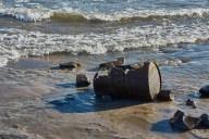 Strandgut mit Schiffswelle