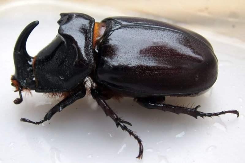 hewan insektivora