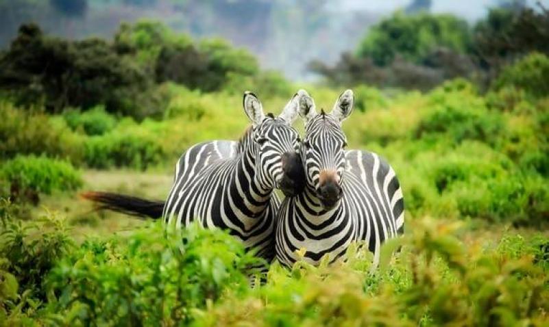 contoh hewan herbivora