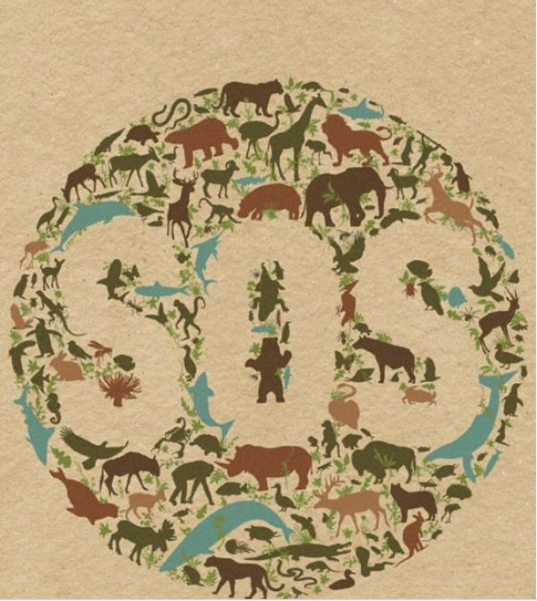 contoh poster hewan langka