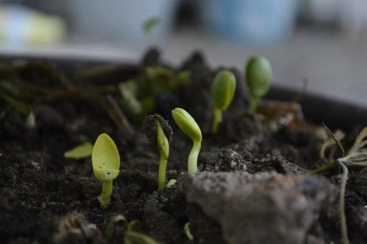 rozmnażanie roślin z sadzonek