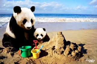 Montaje Osos Panda