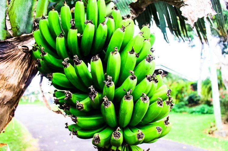 Bananen-Exotische-Früchte-in-Thailand-18-Sorten-die-man-probieren-muss-49